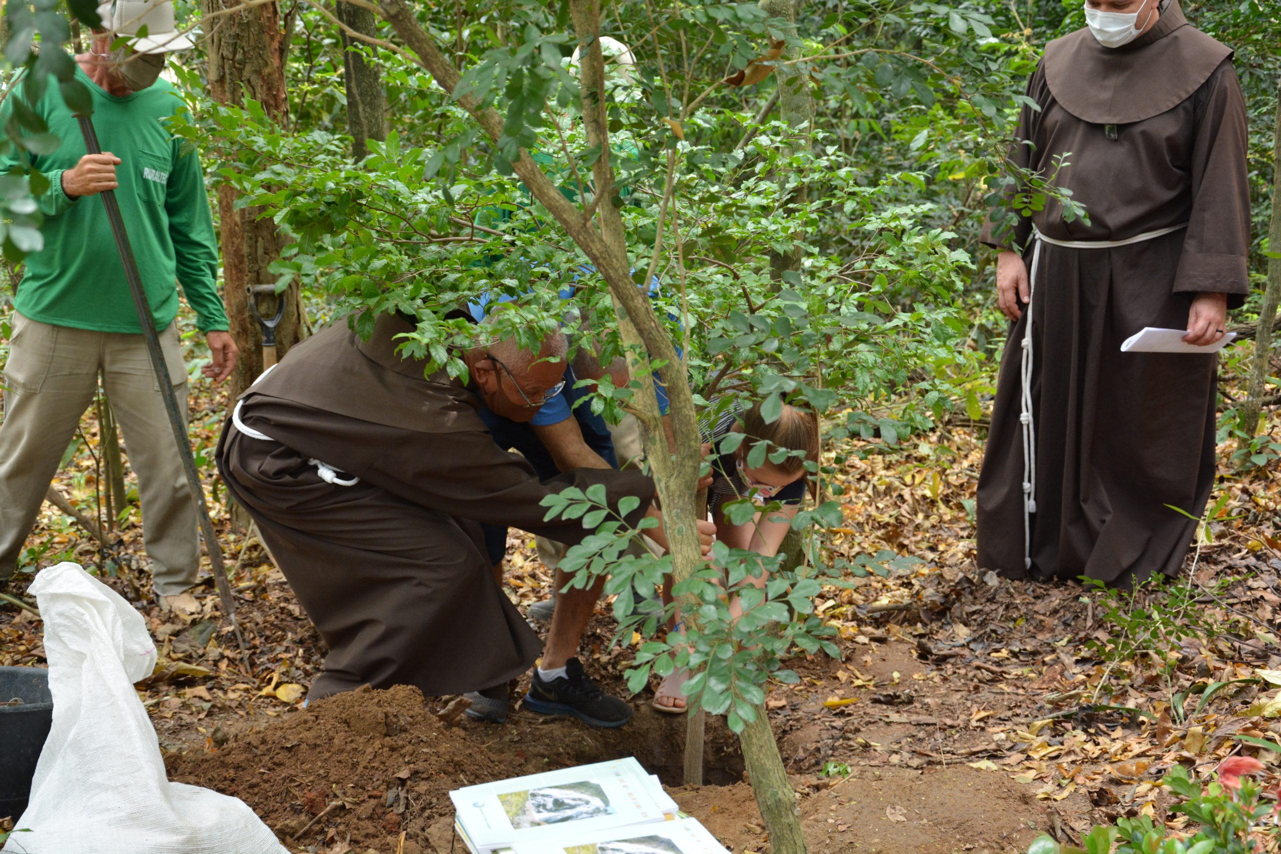 CNBB convida brasileiros a plantarem árvore no dia de Finados